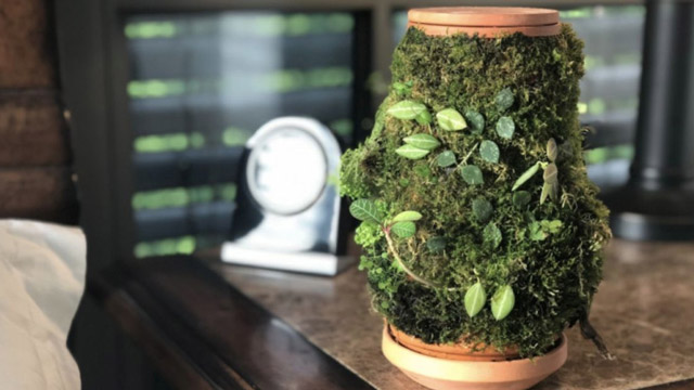terraplanter most funded kickstarter project